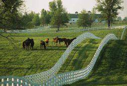 Horse farm in Kentucky